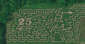 A corn maze with a large bull and star mowed in.